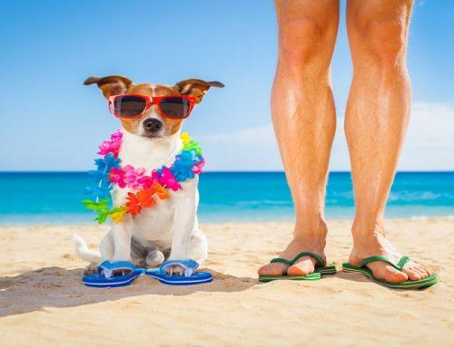 Estate al mare: le regole e le spiagge per i cani
